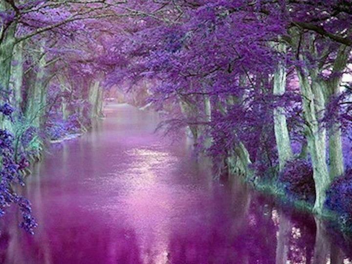 purple stream
