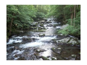 3593210-Big_Creek_Great_Smoky_Mountains_National_Park